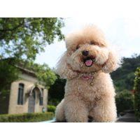 کلیپ های دیدنی از سگ های عروسکی و دوست داشتنی خانگی